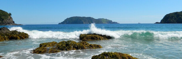 Discover Great Barrier Island